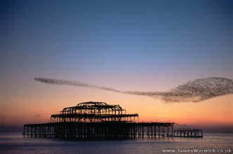 Starlings swarming over the west pier